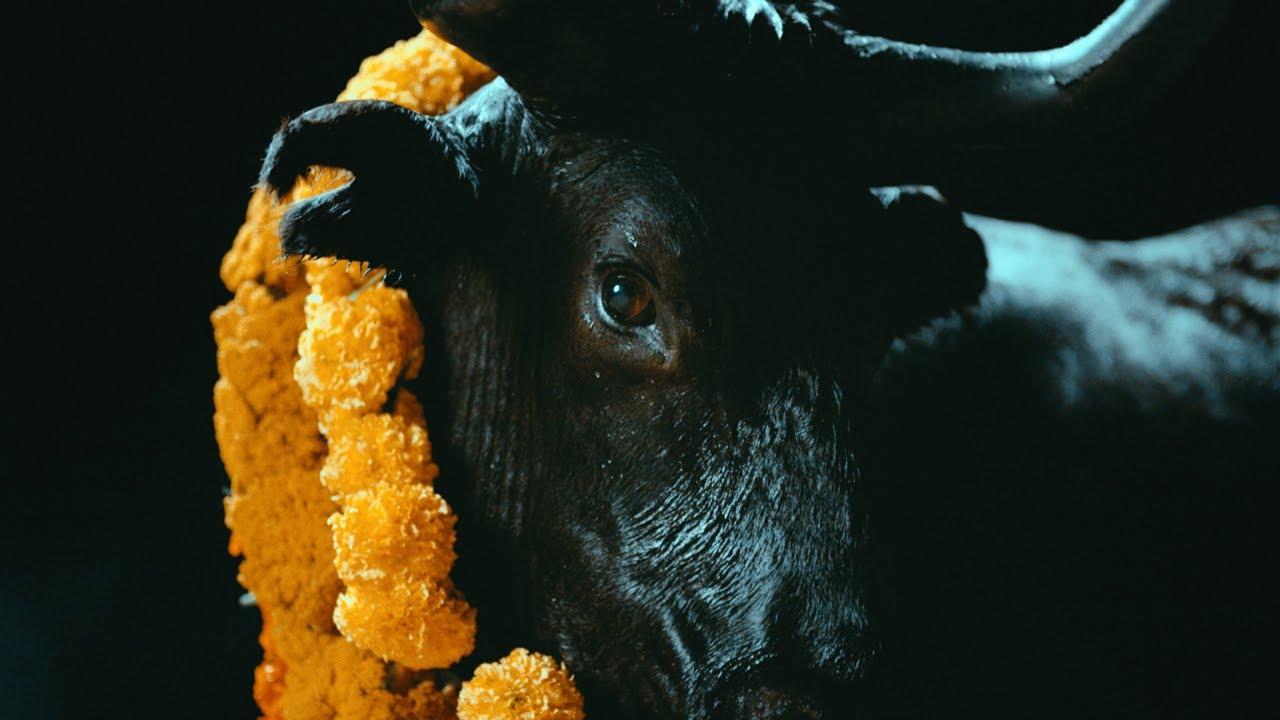 Foals - Black Bull